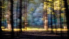 Danube Delta (egyugrasatavasz) Tags: danubedelta danube trees tree abstract nature naturephotography