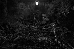 (Mikko Luntiala) Tags: 2018 afsnikkor2470mmf28ged bw blackandwhite bleak d600 dark dismal dystooppinen dystopia dystopic dystopy finland ikkuna lokakuu luonto mustavalkoinen mikkoluntiala nature nikond600 nuuksionationalpark nuuksionkansallispuisto october seinä suomi synkkä wall window