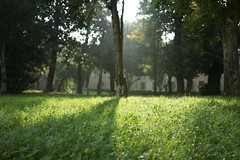 _DSC0360 (marco santagostino) Tags: natura nature pavia leaves foglie erba grass verde green rosso red orange arancione sonya7ii samyang samyangfe35mmf28af 35mm