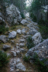Por donde las cabras (SantiMB.Photos) Tags: 2blog 2tumblr 2ig palomera otoño autumn nieve snow bosque forest pedraforca camino way path sendero rocas rocks geo:lat=4221220981 geo:lon=174783274 geotagged saldes cataluna españa esp