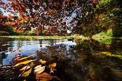 Beneath the tree. (Splat Photo) Tags: sheffield park gardens sussex sony sel1224g autumn leaves leaf golden water trees national trust capture one pro 12mm ultra wide ultrawide nt reflections duck sky ilce7m3