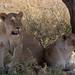 Safari Flickr (117 of 266)
