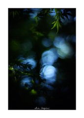 2018/8/25 - 12/27 photo by shin ikegami. - SONY ILCE‑7M2 / 七工匠  7artisans 50mm f1.1 (shin ikegami) Tags: silhouette シルエット 紅葉 macro マクロ sky 空 井の頭公園 吉祥寺 summer 夏 asia sony ilce7m2 sonyilce7m2 a7ii 50mm 七工匠 7artisans 7artisans50mmf11 tokyo photo photographer 単焦点 iso800 ndfilter light shadow 自然 nature 玉ボケ bokeh depthoffield naturephotography art photography japan earth