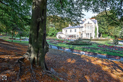 Under the Vale of Autumn (alundisleyimages@gmail.com) Tags: valepark autumn seasons weather landscape leaves fall sunny merseyside benches park publicspaces trees paths shadows publicplace openspaces outdoors flowerbeds gardens fencing treetrunk nature