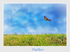 Elusive Butterfly (Christina's World Off and On) Tags: butterfly flowers sky clouds textures summer colorful california sandiego papillon painterly seasons yellow blue song mariposa minimalism