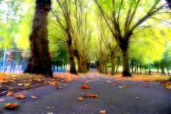 Fractalius Friday, Aston Park. (Manoo Mistry) Tags: aston astonpark astonhall parks openspace trees leaves autumn autumncolours autumnleaves nikon nikond5500 tamron tamron18270mmzoomlens fractalius