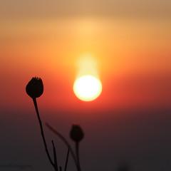 rond (Mireille Muggianu) Tags: bouchesdurhone cassis europe france provencealpescotedazur carré coucherdesoleil mer minimal paysage square sunset samsungnx nx500