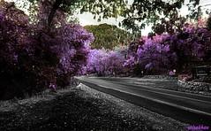 """Always ask yourself: ""What will happen if I say nothing?"" ― Kamand Kojouri (zairakhan) Tags: trees hue editing serenity millcreekutah utahusa walk road outdoor autumn"