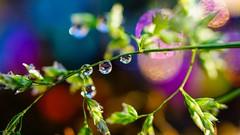 Droplets - 6037 (ΨᗩSᗰIᘉᗴ HᗴᘉS +23 000 000 thx) Tags: water macro bokeh drop droplet color hensyasmine namur belgium europa aaa namuroise look photo friends be wow yasminehens interest intersting eu fr greatphotographers lanamuroise