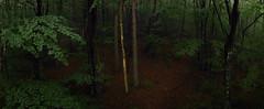 Forest Drone (virtualwayfarer) Tags: landscape europe european france frenchcountryside countryside nature landscapephotography forest roadtrip natural backroads windingroads countryroads fr auvergnerhônealpes sainthostien french alexberger mavicair dji mavic travel travelphotography visitfrance