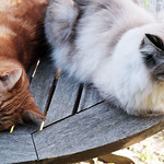Furry twins thumbnail