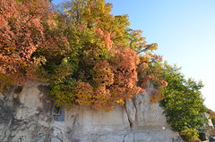 DSC_5397 (Sector2000) Tags: осень золотаяосень парк природа листья деревья automn выходной лес парки