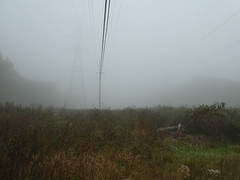 P1020153 (rpealit) Tags: scenery wildlife nature weldon brook management area