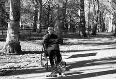 The Dog Walker (IanAWood) Tags: london londonstreetphotography nikkorafs58mmf14g nikondf walkingwithmynikon