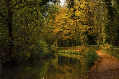 Autumnal Canal (Wildlife & Nature Photography) Tags: canal autumn fall england derbyshire peakdistrict outdoors trees water reflections nature cromford unitedkingdom woodland cromfordcanal footpath towpath canon canon600d canoneos600d