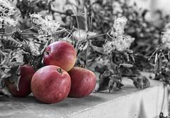 Fruits of the harvest (David Feuerhelm) Tags: fruit apples nikkor red colourpopping foliage autumn harvest harvestfestival nikon d750 2470mmf28 photoshop