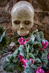 Remembrance (Leaning Ladder) Tags: italy italia tuscany montecatini montecatinialto skull flowers leaningladder