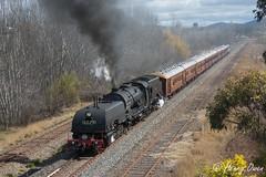 Canberrian Slog (Henry's Railway Gallery) Tags: 6029 ad60class garratt steamlocomotive steamtrain heritagetrain thnsw transportheritagensw passengertrain 6s76 canberra