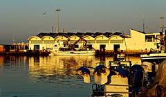 Puerto pesquero de la Caleta de Velez al amanecer (portalealba) Tags: torredelmar caletadevelez axarquía málaga andalucía españa spain portalealba canon eos1300d