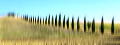 Somewhere in Puglia (Karma2c) Tags: basilicata italia italy trees