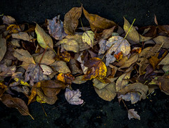 October (marinachi) Tags: october olympusem10markii outdoor fall autumn leaves