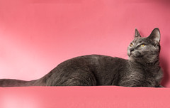 Absolute Gentleness (Ellsasha) Tags: feline felines cat cats feral ferals domesticated tamed wild pinks gray grey