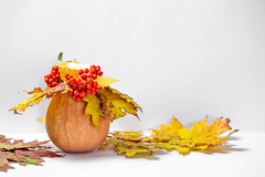 Autumn background with glowing candles, pumpkin and yellow leaves (wuestenigel) Tags: leaves lit pumpkin fire candle candlestick yellow background autumn white noperson keineperson fall fallen leaf blatt nature natur stilllife stillleben grow wachsen flower blume food lebensmittel color farbe fruit obst desktop blur verwischen thanksgiving daserntedankfest bright hell summer sommer cutout ausgeschnitten flora closeup nahansicht disjunct disjunkt wood holz