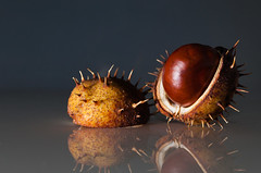 Chestnut (Shumilinus) Tags: 1855mmf3556 2013 nikond300s stilllife chestnuts reflections spikes