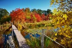 Wooden bridge (Tobi_2008) Tags: brücke bridge teich pond herbst autumn sachsen saxony deutschland germany allemagne germania