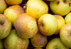 Apples 2 (S's images) Tags: west dean garden autumn harvest apples kitchen fruit orchard yellow