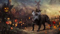 Olly-7.jpg (___INFINITY___) Tags: 6d animal canon darrenwright dazza1040 dog eos infinity pet portrait aberdeen dof