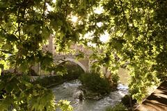 Isola Tiberina - Roma (rizzageorge) Tags: 500px isola tiberina roma green tree bridge italian italia sun leaves shadow tourism river travel romantic