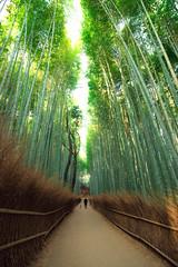 Arashiyama Bamboo Grove - Kyoto, Japan (inefekt69) Tags: arashiyama kyoto japan bamboo grove forest trees nature nikon d5500 京都 日本 嵐山 tumblr