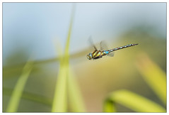 Through the reeds (stephen.darlington) Tags: bushypark hamptoncourt kingston royalpark sssi surrey teddington