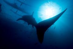 IMG_6885 (Gil Xavier) Tags: underwater scuba philippines canon fantasea g7xmk2 cebu moalbal turtlebay