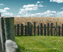 fence, field and sky (brown_theo) Tags: thornville ohio backwoods fest autumn fall corn postprocess clouds perrycounty