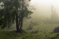 In the Clouds of the Alps (Netsrak) Tags: at alpen alps baum berg bäume eu europa europe landschaft natur nebel wald fog landscape mist mountain nature woods