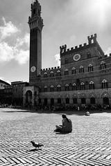 Street...photo (Michele Fini) Tags: siena piazza campo people torre street photo