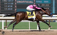 Game Winner (angelnumber25) Tags: horse racehorse thoroughbred horseracing santaanitapark equinephotography sportsphotography gamewinner