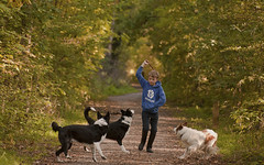 Four friends... (A child in the night) Tags: boy dogs bordercollie sheepdogs walk leaf path trail throw cheshire england