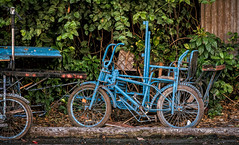 Blue Pedicab (FotoGrazio) Tags: phototoart bicycle wheels waynesgrazio streetscene street streetphotography fotograzio chain travelphotography bike philippines filipino peddles stilllife mindanao blue abandoned waynestevengrazio davaocity waynegrazio secure transportation cycleframe handles business used tricycle locked pedicab