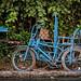 Blue Pedicab