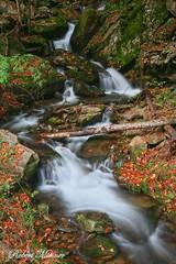 Catskill Waterfall (Bob the Birdman and All Around Nature Guy) Tags: catskills catskillwaterfall robertmiesner bobthebirdman stream creek fall water woods longexposure landscape nature