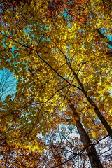 Autumn color Peak (Epperly Photographic Images) Tags: autumn colors fall nature trees