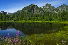 The Other Side of the Picture (RobertCross1 (off and on)) Tags: a7rii alpha cascaderange cascades deming emount fe1635mmf4zaoss ilce7rm2 mountbaker mtbakersnoqualmienationalforest nationalforest northcascades pacificnorthwest picturelake sony wa washington whatcom bluesky fireweed flowers forest fullframe lake landscape mirrorless mountains pond reflection snow trees water wildflowers