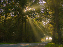 October morning (katrinchen59) Tags: sunbeams sunrays forest trees naturephotography forestphotography branches sonnenstrahlen wald bäume naturfotografie sonnenlicht sunlight misty nebelig autumn herbst autumnforest herbstwald zonnestralen bos bomen natuurphotographie mist zonlicht herfst herfstbos