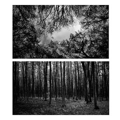 Lost (Maria Zaharieva) Tags: land landscape forestlandscape forest trees treescape woods intothewoods intothewild autumn nature blackandwhite black white bw bulgaria contrast shadows lines linear rythm dark darkforest collage travel travelling sky skyscape clouds cloudscape