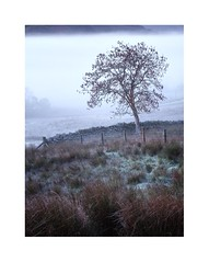 (John Ormerod) Tags: tree leaves autumn mist morning cold fence lakedistrict cumbria autumnal landscape nikon d800 frost photography photograph