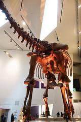 Big dinosaur bones (quinet) Tags: 2017 aborigène canada firstnations indian kunst ontario rom royalontariomuseum toronto ureinwohner aboriginal art museum musée native