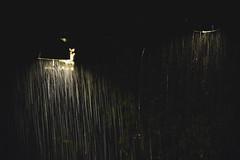 Downfall (photographybyjoss ↟↟) Tags: downfall rain autumn water bokej canoneos5dmarkiii dark mood moody matte nordic outside liquid sweden